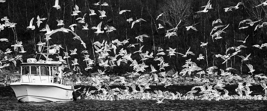 Fischerboot mit Möwen ∙ Fishing boat with seagulls